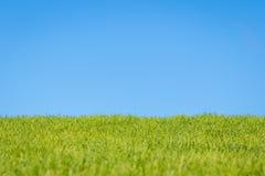 Ουρανός και χλόη στοκ φωτογραφία με δικαίωμα ελεύθερης χρήσης