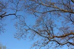 Ουρανός και brunch Στοκ φωτογραφίες με δικαίωμα ελεύθερης χρήσης