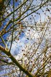 ουρανός κλάδων Στοκ φωτογραφίες με δικαίωμα ελεύθερης χρήσης