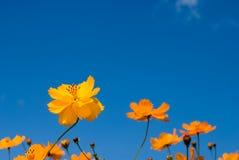 ουρανός κόσμου κίτρινος Στοκ φωτογραφίες με δικαίωμα ελεύθερης χρήσης