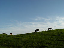 ουρανός λιβαδιών αγελάδων στοκ φωτογραφίες
