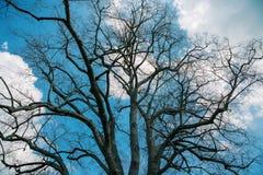Ουρανός μέσω των κλάδων χειμερινών δέντρων Στοκ Εικόνες