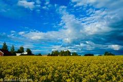 Ουρανός με μορφή αετών Στοκ φωτογραφία με δικαίωμα ελεύθερης χρήσης