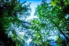 Ουρανός με τα σύννεφα και ηλιοφάνεια μέσω της κατώτατης άποψης κλάδων δέντρων φθινοπώρου Στοκ εικόνες με δικαίωμα ελεύθερης χρήσης