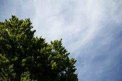 Ουρανός με το δέντρο Στοκ φωτογραφία με δικαίωμα ελεύθερης χρήσης