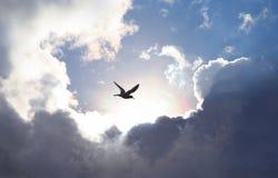 ουρανός μυγών Στοκ Φωτογραφίες