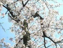 Ουρανός λουλουδιών αγάπης @ Στοκ Εικόνες