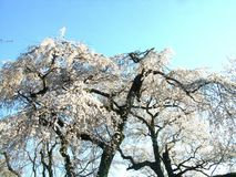 Ουρανός & λουλούδι ομορφιάς στοκ φωτογραφίες με δικαίωμα ελεύθερης χρήσης