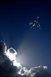 ουρανός πουλιών Στοκ εικόνες με δικαίωμα ελεύθερης χρήσης