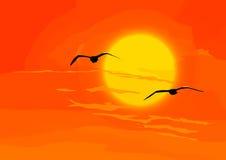 ουρανός Πουλιά με το πορτοκαλί ηλιοβασίλεμα Στοκ Εικόνες