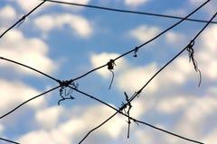 ουρανός που συνδέεται με καλώδιο Στοκ Εικόνες