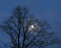 Ουρανός πρωινού το χειμώνα με το φεγγάρι Στοκ εικόνα με δικαίωμα ελεύθερης χρήσης