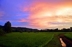 Ουρανός ρυζιού στοκ φωτογραφία με δικαίωμα ελεύθερης χρήσης