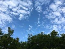 ουρανός στο δάσος μου Στοκ Φωτογραφία