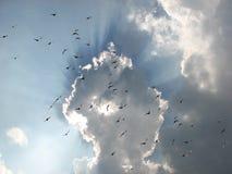 ουρανός σύννεφων πουλιών Στοκ Εικόνες