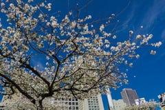 Ουρανός του Σικάγου στοκ φωτογραφίες