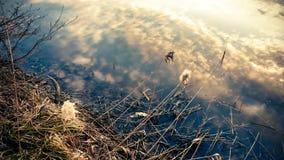 Ουρανός φθινοπώρου που απεικονίζει στο νερό από την άκρη μιας λίμνης στοκ εικόνες