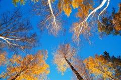 Ουρανός φθινοπώρου Στοκ εικόνα με δικαίωμα ελεύθερης χρήσης