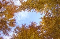 Ουρανός φθινοπώρου Στοκ Φωτογραφίες