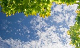 ουρανός φύλλων Στοκ εικόνα με δικαίωμα ελεύθερης χρήσης