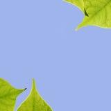 ουρανός φύλλων Στοκ φωτογραφίες με δικαίωμα ελεύθερης χρήσης