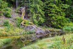 ουρανός φύσης λιμνών σύννεφων Στοκ Εικόνες