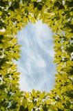 Ουρανός φύλλων σφενδάμου πλαισίων Στοκ εικόνες με δικαίωμα ελεύθερης χρήσης