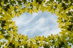 Ουρανός φύλλων σφενδάμου πλαισίων Στοκ φωτογραφία με δικαίωμα ελεύθερης χρήσης