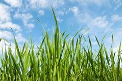 ουρανός χλόης Στοκ εικόνα με δικαίωμα ελεύθερης χρήσης