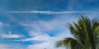 Ουρανός ‹and†‹blue†‹Coconut†‹leaves†στοκ εικόνα