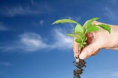 ουρανός 2 φυτών στοκ φωτογραφίες με δικαίωμα ελεύθερης χρήσης