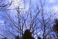 Ουρανός Timelapse - βράση απόθεμα βίντεο