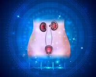 Ουρική υγειονομική περίθαλψη συστημάτων διανυσματική απεικόνιση