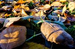Ουσία και φύλλα αποσύνθεσης οργανική που βλέπουν σε ένα δασικό πάτωμα το χειμώνα Στοκ φωτογραφία με δικαίωμα ελεύθερης χρήσης