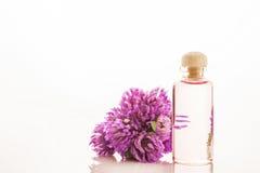 Ουσία των λουλουδιών κόκκινου τριφυλλιού Στοκ Εικόνα