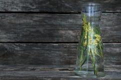 Ουσιαστικό πετρέλαιο λουλουδιών Antirrhinum σαν αποτελεσματική βοτανική μεταχείρηση perforatum ιατρικής hypericum κατάθλιψης ακρι Στοκ Εικόνες