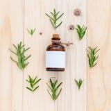 Ουσιαστικό πετρέλαιο δεντρολιβάνου Natural Spa συστατικών για aromatherapy Στοκ Εικόνες