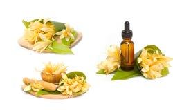 Ουσιαστικό πετρέλαιο Champaka για τη SPA aromatherapy Στοκ φωτογραφία με δικαίωμα ελεύθερης χρήσης