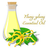 Ουσιαστικό πετρέλαιο ylang-ylang Στοκ εικόνα με δικαίωμα ελεύθερης χρήσης