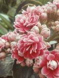 λουλούδια αναδρομικά Στοκ Εικόνες