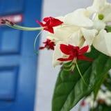 λουλούδια ελληνικά Στοκ φωτογραφίες με δικαίωμα ελεύθερης χρήσης
