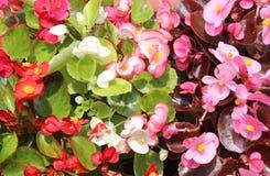 λουλούδια διακοσμητι&k Στοκ Φωτογραφίες