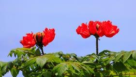 λουλούδια κάτοικος τη&s Στοκ Εικόνες