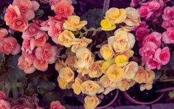 λουλούδια καρτών ανασκόπησης που χαιρετούν τον καθολικό εκλεκτής ποιότητας Ιστό προτύπων σελίδων Στοκ Εικόνα