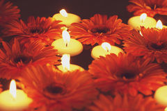 λουλούδια κεριών Στοκ εικόνα με δικαίωμα ελεύθερης χρήσης