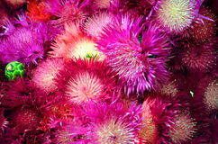 λουλούδια μαγικά Στοκ φωτογραφία με δικαίωμα ελεύθερης χρήσης