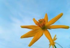 λουλούδια με τα όμορφα χρώματα Στοκ εικόνα με δικαίωμα ελεύθερης χρήσης
