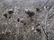 λουλούδια παγωμένα Στοκ εικόνες με δικαίωμα ελεύθερης χρήσης