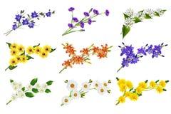 λουλούδια που απομονών Στοκ εικόνες με δικαίωμα ελεύθερης χρήσης