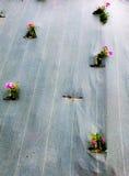 λουλούδια που παγιδεύονται σε ένα tarp Στοκ Εικόνες